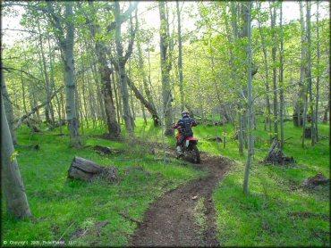 Bull Ranch Creek Nevada Motorcycle And Atv Trails