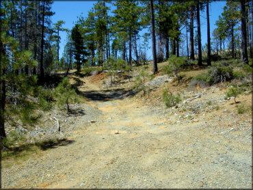 Elk Camp Ridge Trail