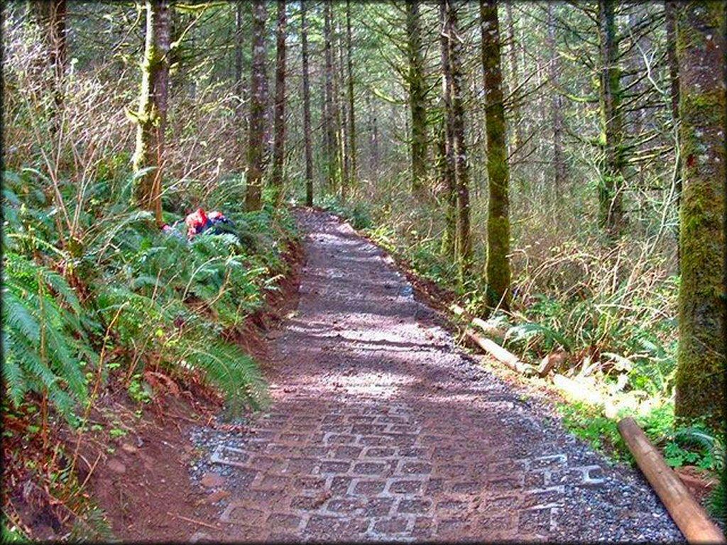 Jones Creek Trail System - Washington Motorcycle and ATV Trails
