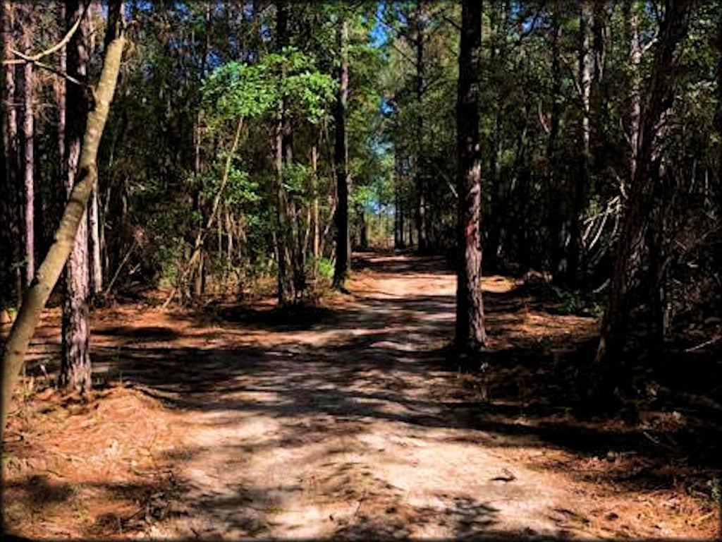 Zona ATV Recreation Park - Louisiana Motorcycle and ATV Trails